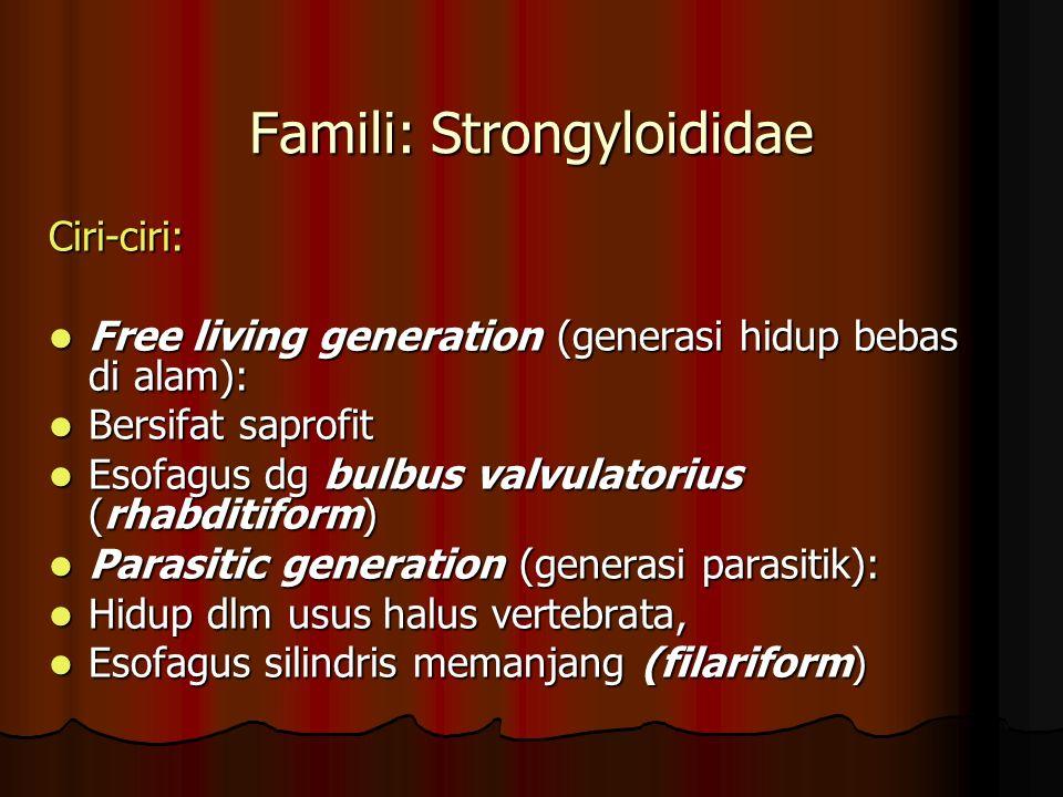 Famili: Strongyloididae