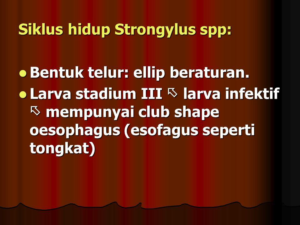 Siklus hidup Strongylus spp: