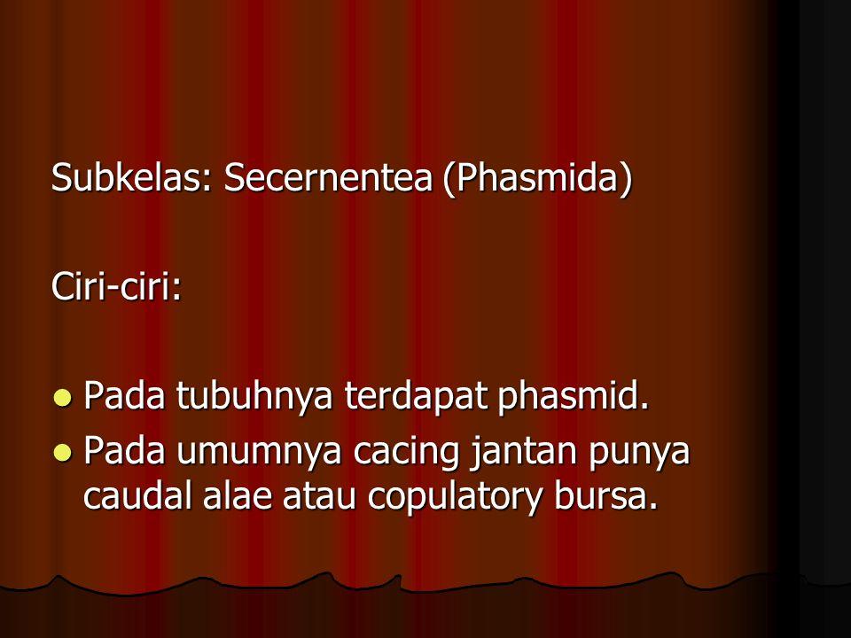 Subkelas: Secernentea (Phasmida)