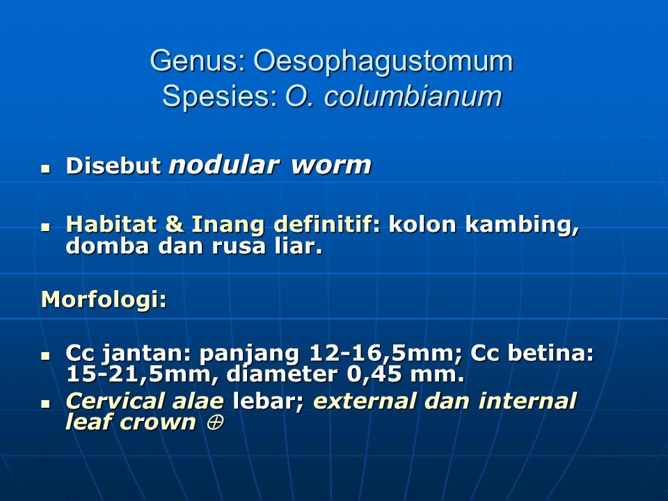 Genus: Oesophagustomum Spesies: O. columbianum