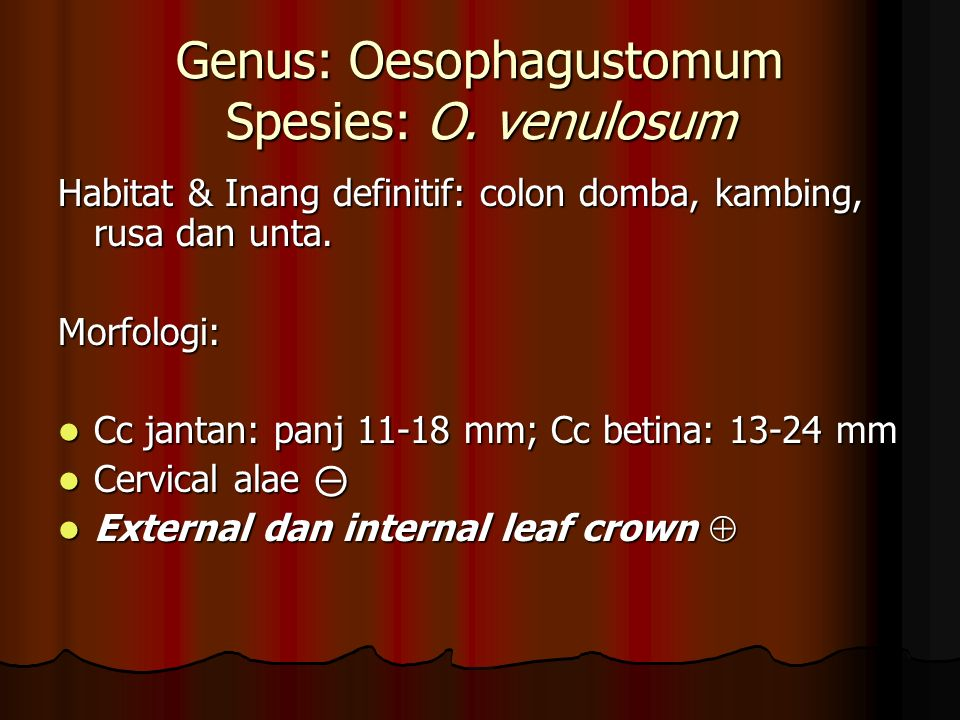 Genus: Oesophagustomum Spesies: O. venulosum