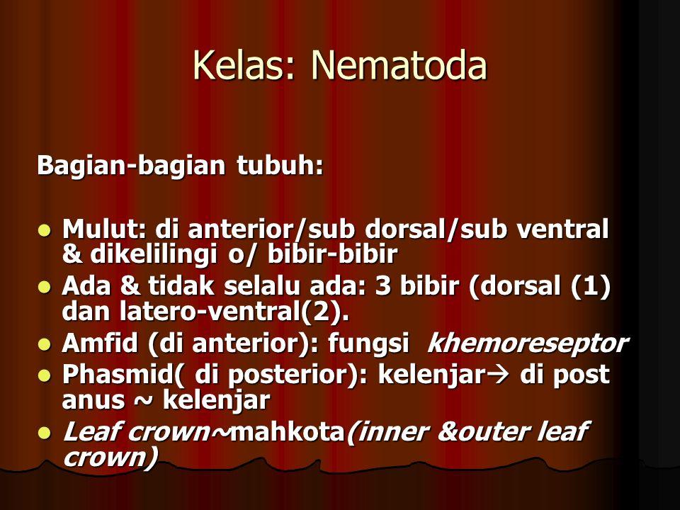 Kelas: Nematoda Bagian-bagian tubuh: