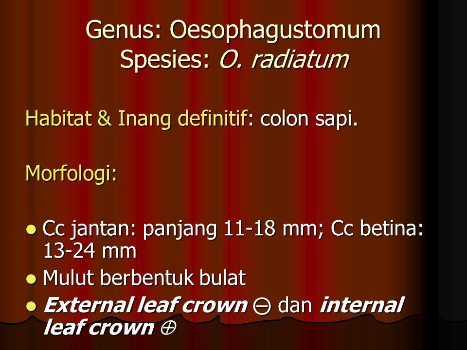 Genus: Oesophagustomum Spesies: O. radiatum