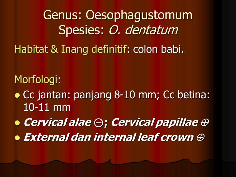 Genus: Oesophagustomum Spesies: O. dentatum