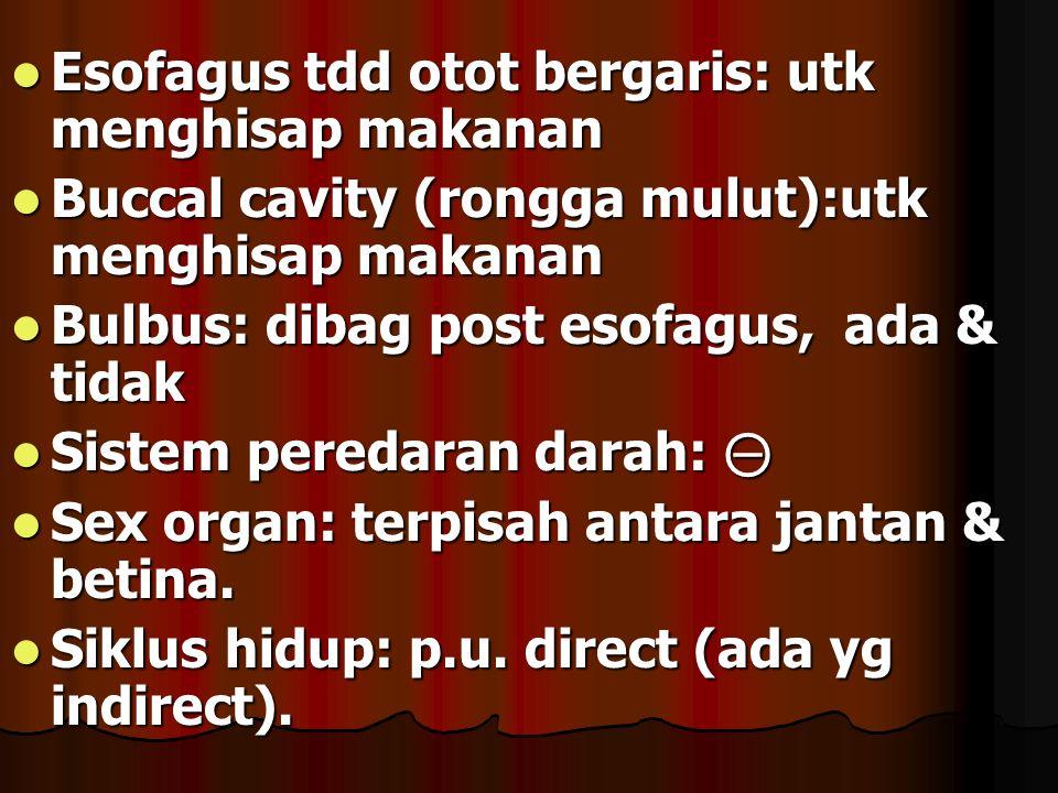 Esofagus tdd otot bergaris: utk menghisap makanan