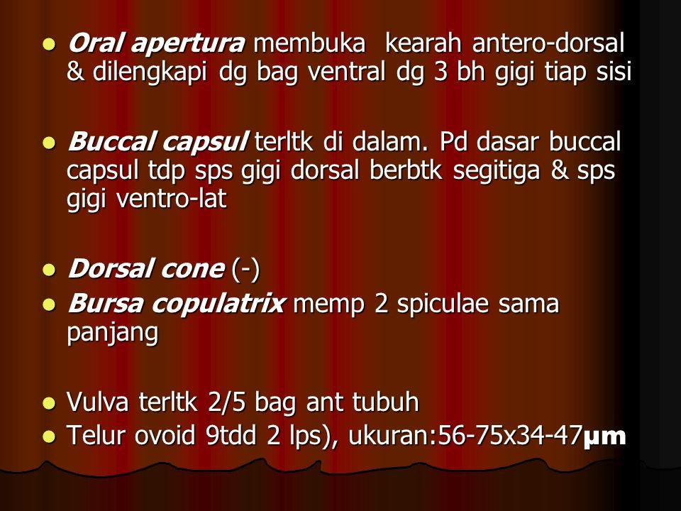 Oral apertura membuka kearah antero-dorsal & dilengkapi dg bag ventral dg 3 bh gigi tiap sisi