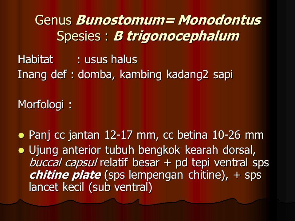 Genus Bunostomum= Monodontus Spesies : B trigonocephalum
