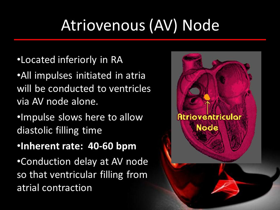 Atriovenous (AV) Node Located inferiorly in RA