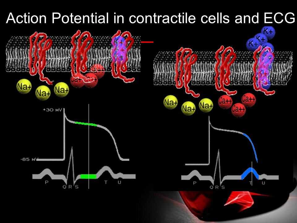 Action Potential in contractile cells and ECG