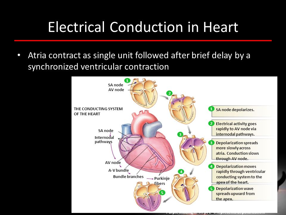 Electrical Conduction in Heart
