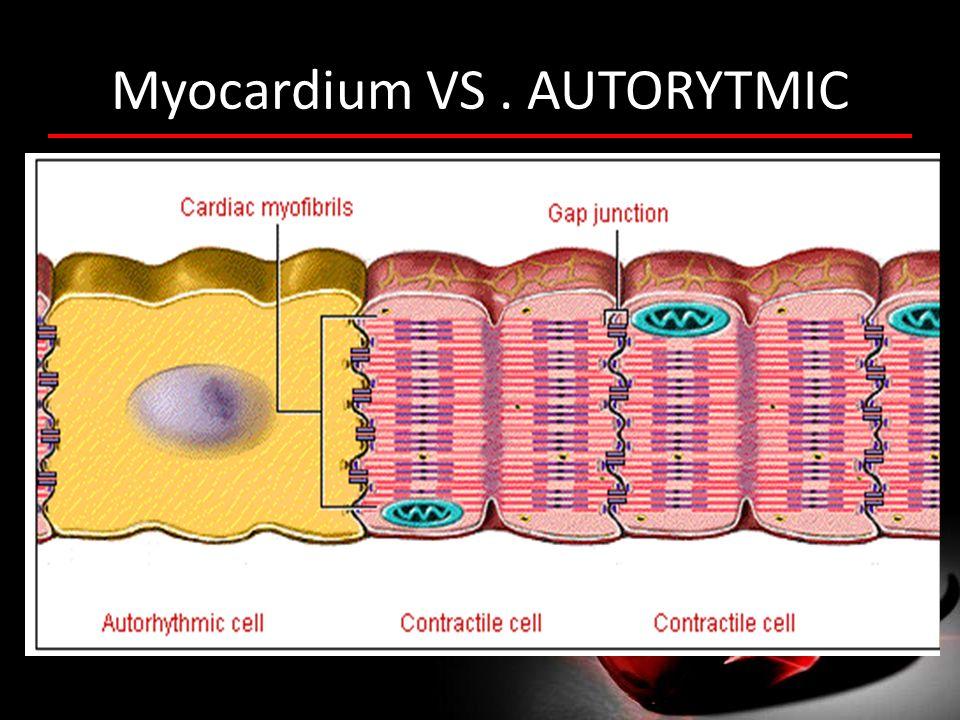 Myocardium VS . AUTORYTMIC