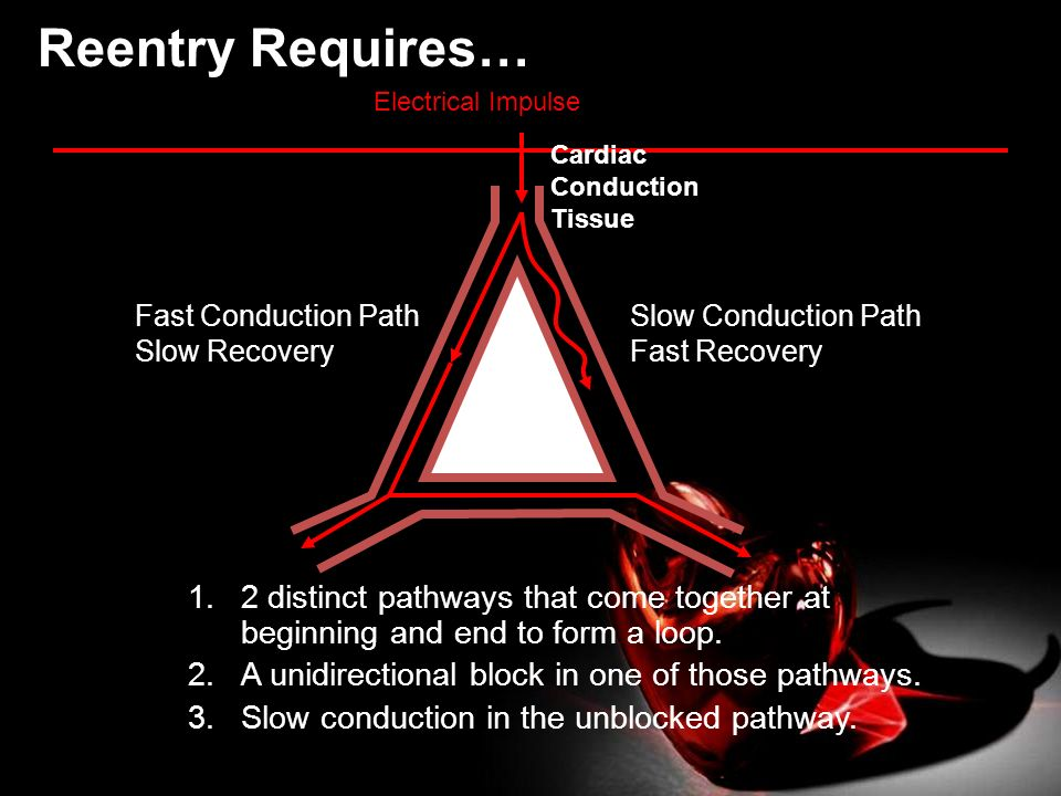 Reentry Requires… Electrical Impulse. Cardiac Conduction Tissue. Fast Conduction Path. Slow Recovery.