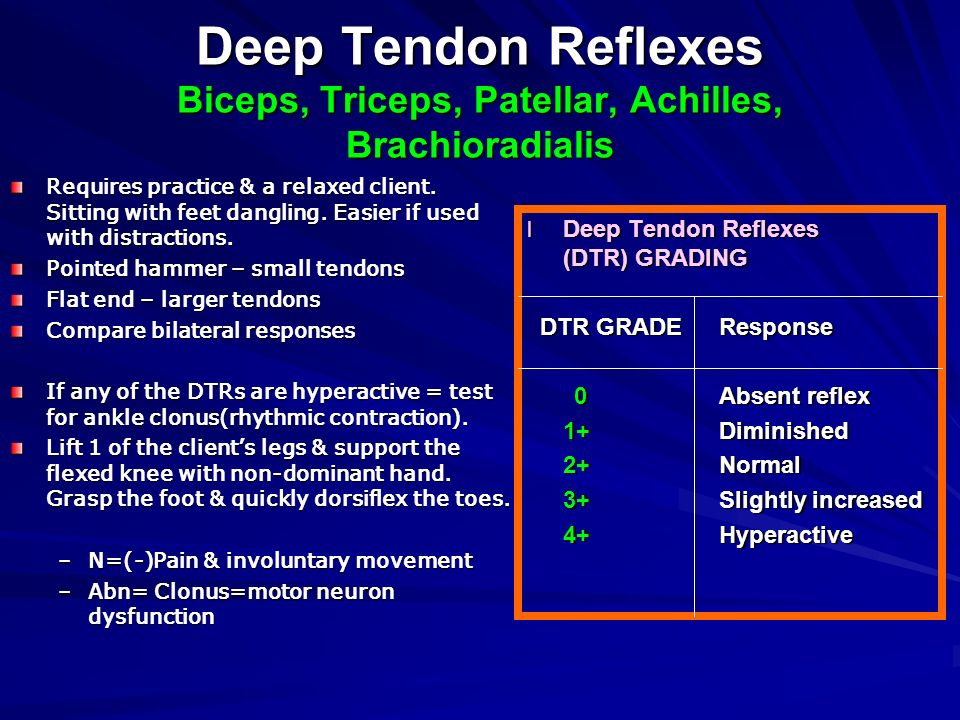 Deep Tendon Reflexes Biceps, Triceps, Patellar, Achilles, Brachioradialis
