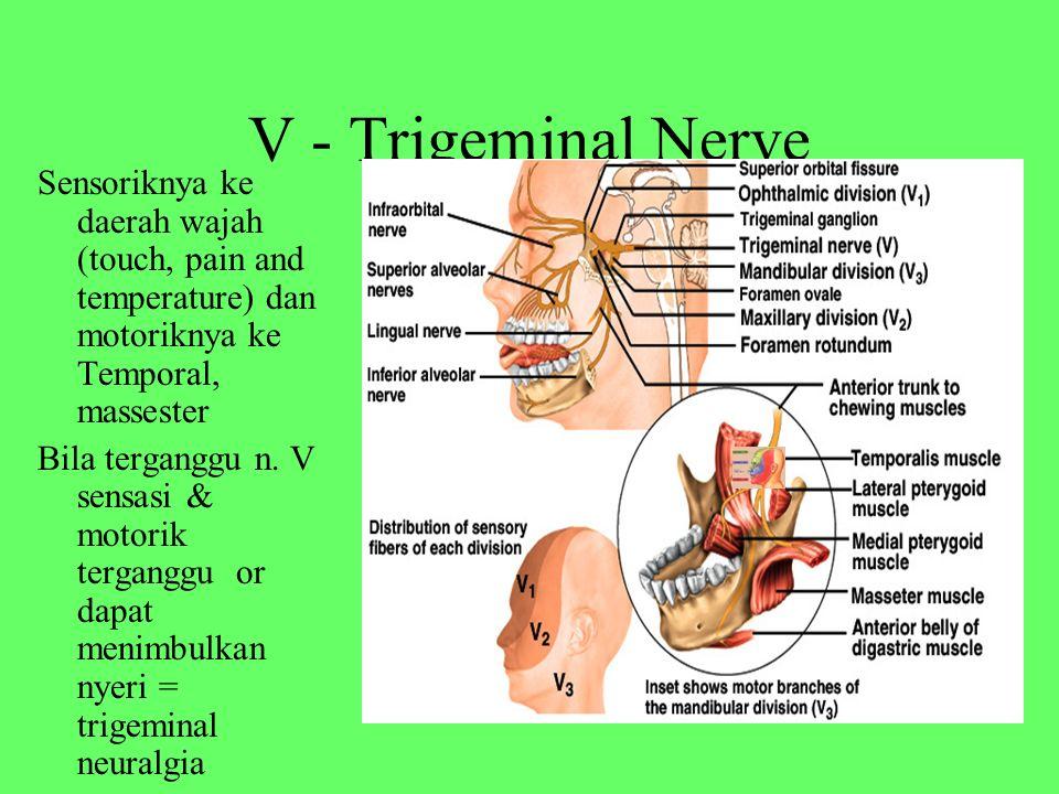 V - Trigeminal Nerve Sensoriknya ke daerah wajah (touch, pain and temperature) dan motoriknya ke Temporal, massester.