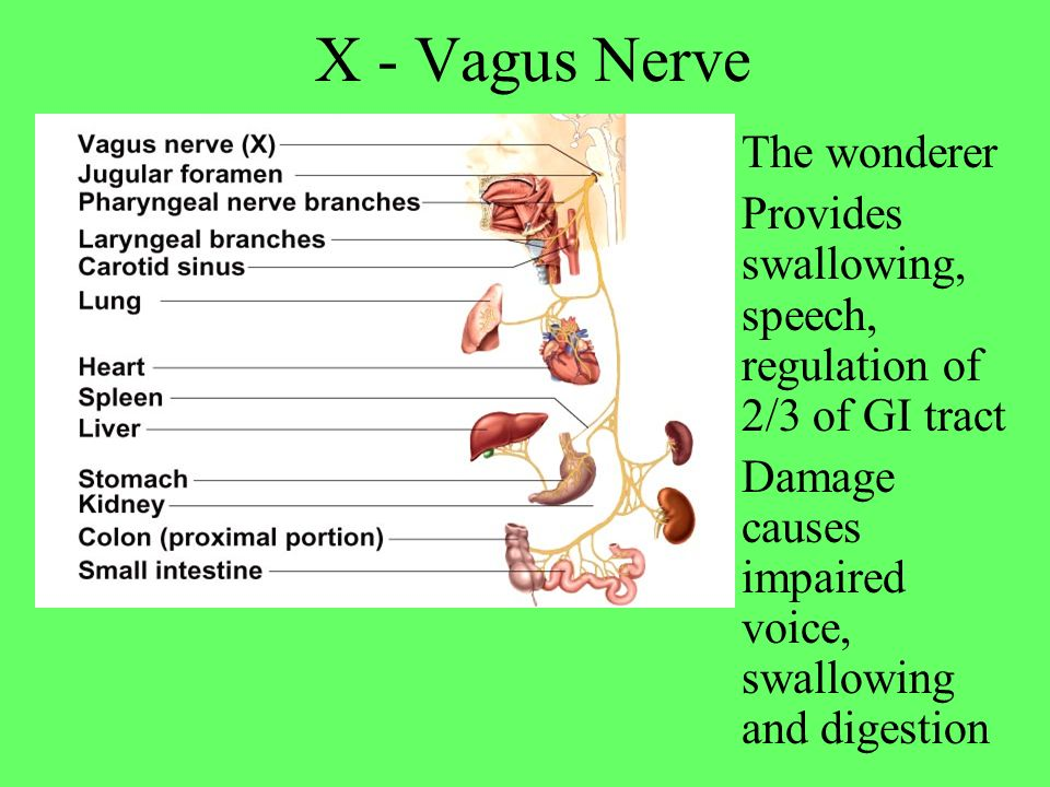 X - Vagus Nerve The wonderer