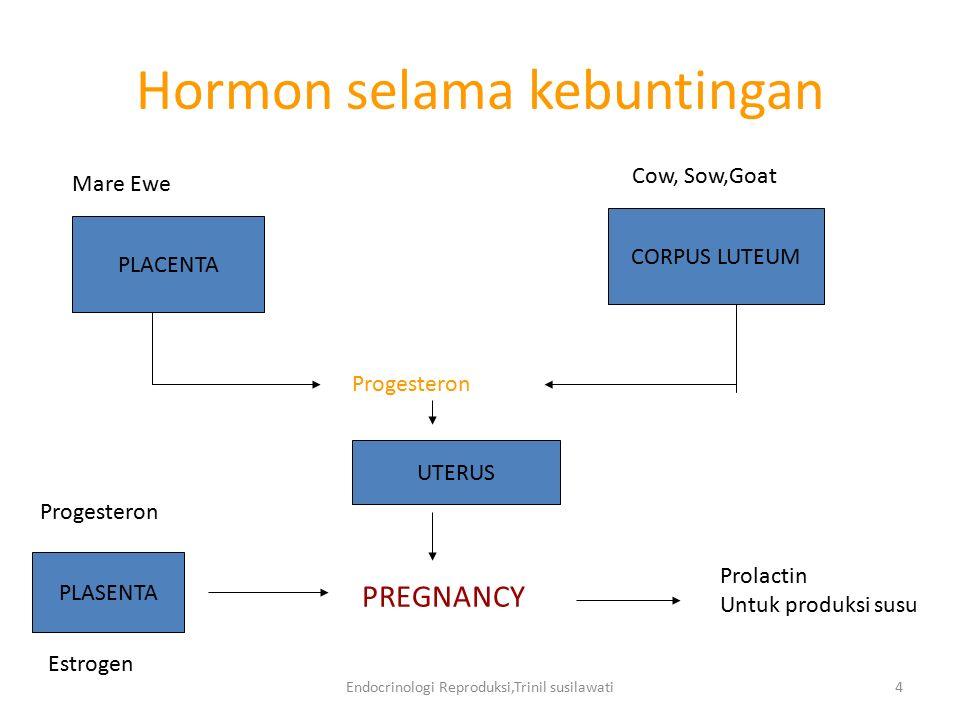 Hormon selama kebuntingan