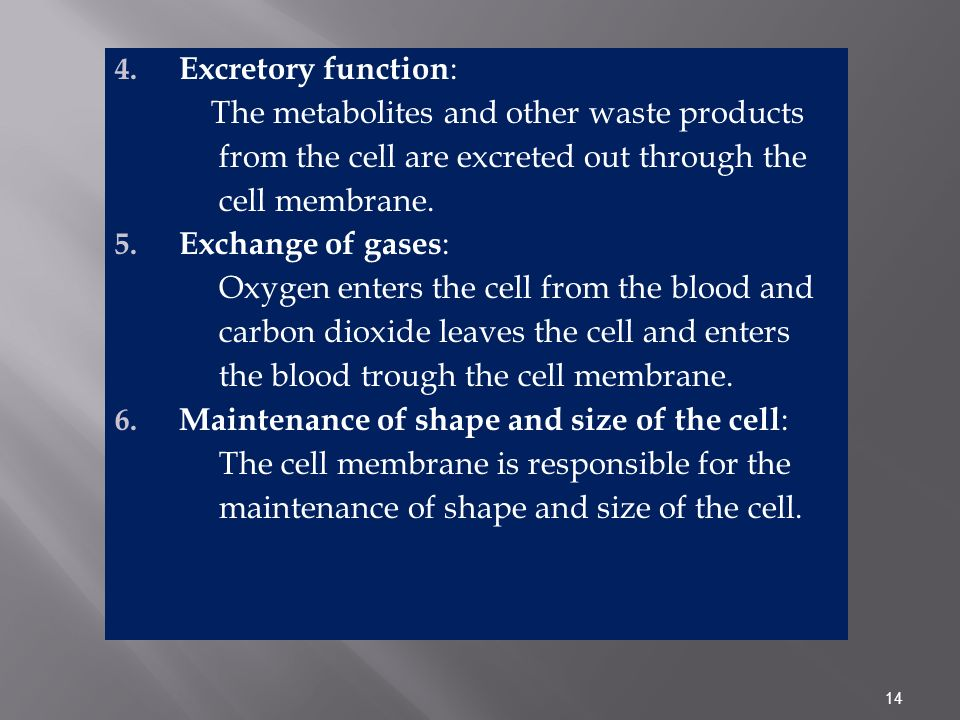 Excretory function: The metabolites and other waste products. from the cell are excreted out through the.