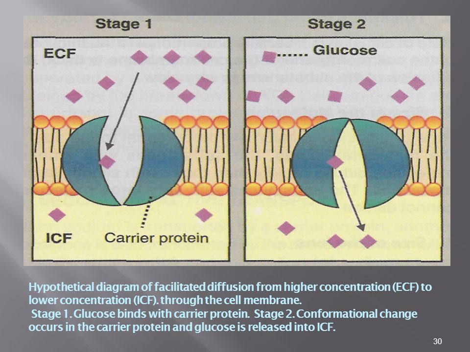 Hypothetical diagram of facilitated diffusion from higher concentration (ECF) to lower concentration (ICF).