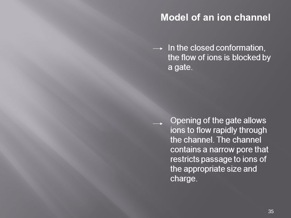 Model of an ion channel In the closed conformation, the flow of ions is blocked by a gate.