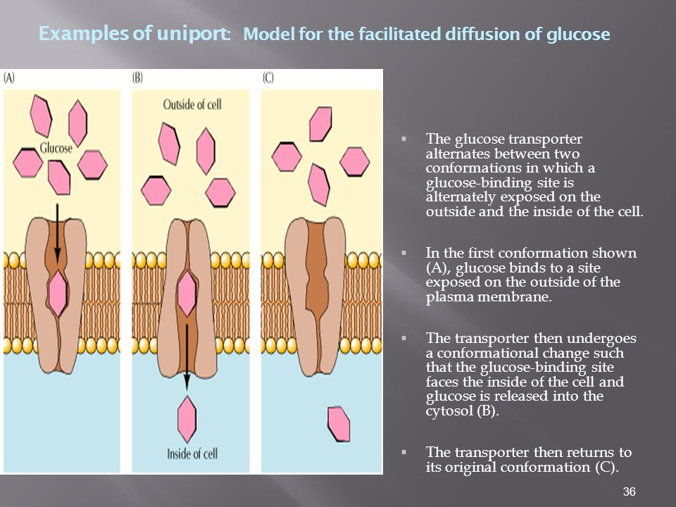 Examples of uniport: Model for the facilitated diffusion of glucose