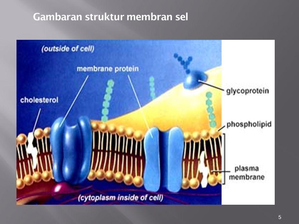 Gambaran struktur membran sel