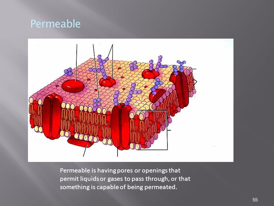 Permeable Permeable is having pores or openings that permit liquids or gases to pass through, or that something is capable of being permeated.