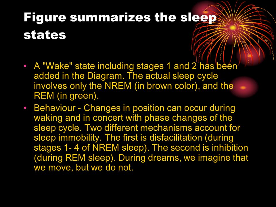 Figure summarizes the sleep states