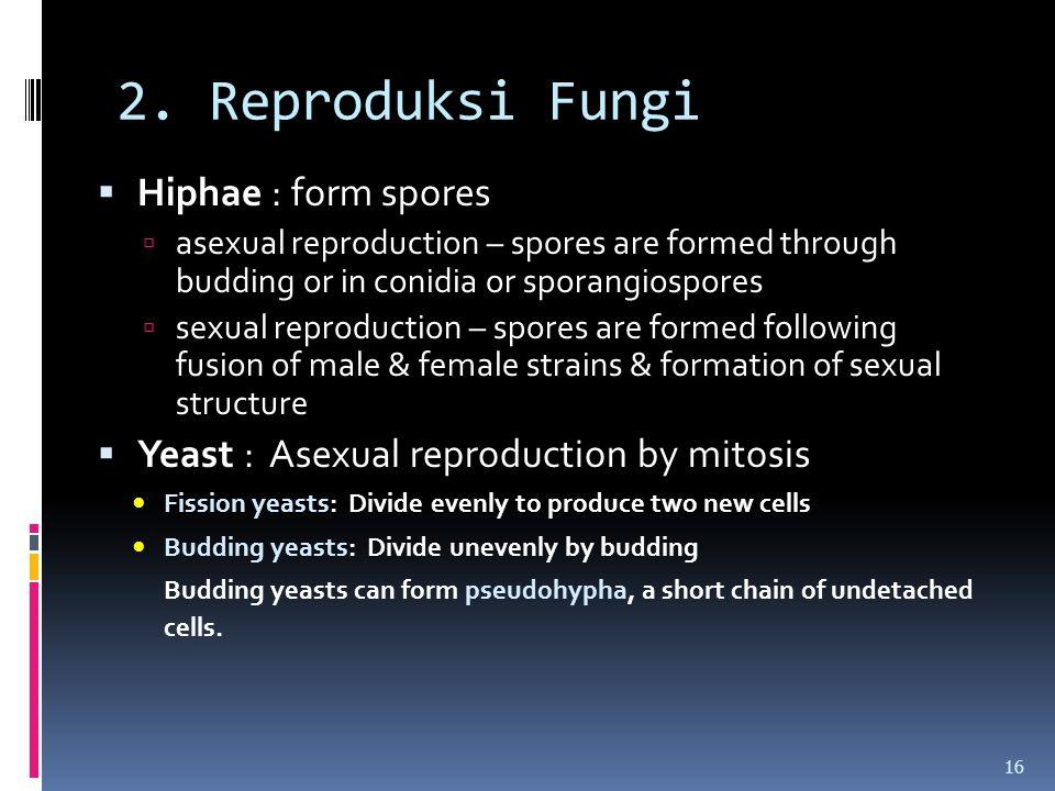 2. Reproduksi Fungi Hiphae : form spores