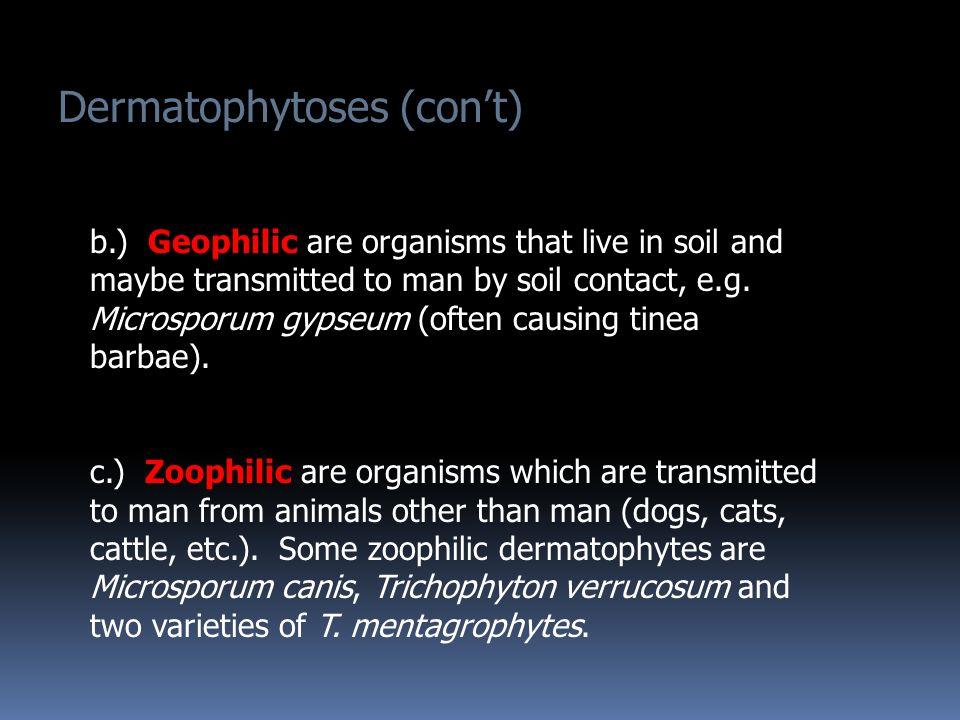 Dermatophytoses (con't)