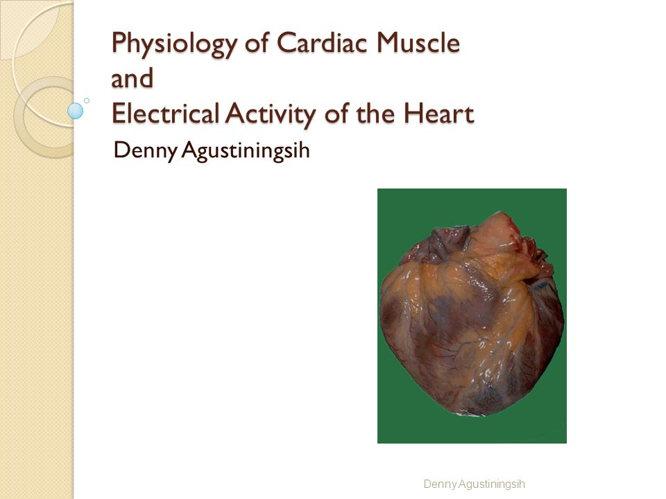 Physiology of Cardiac Muscle and Electrical Activity of the Heart