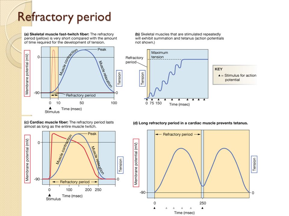 Refractory period