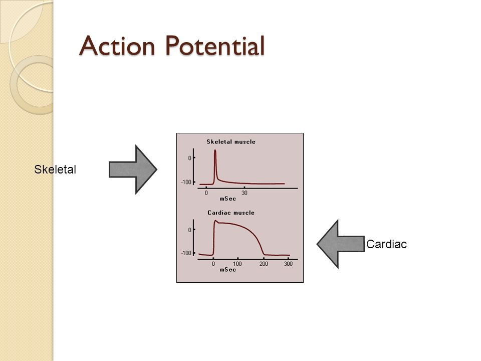 Action Potential Skeletal Cardiac