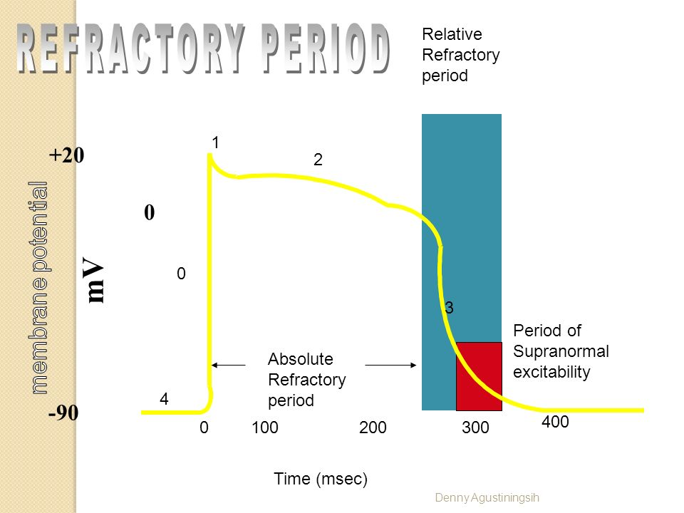 REFRACTORY PERIOD mV +20 -90 Relative Refractory period 1 2 3