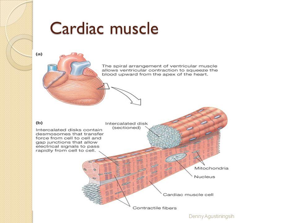 Cardiac muscle Denny Agustiningsih