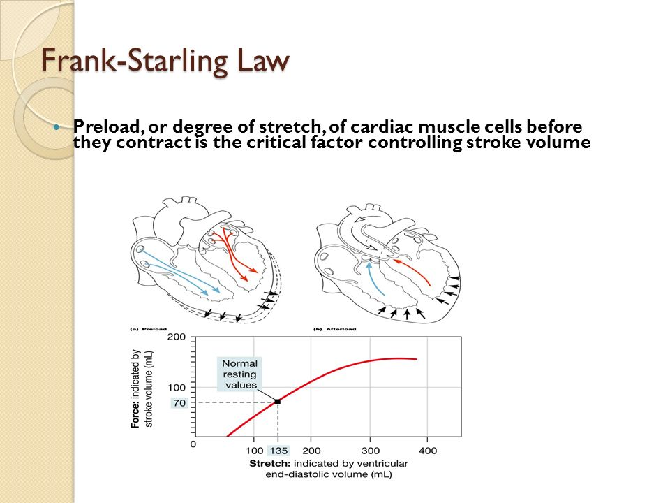 Frank-Starling Law Preload, or degree of stretch, of cardiac muscle cells before they contract is the critical factor controlling stroke volume.