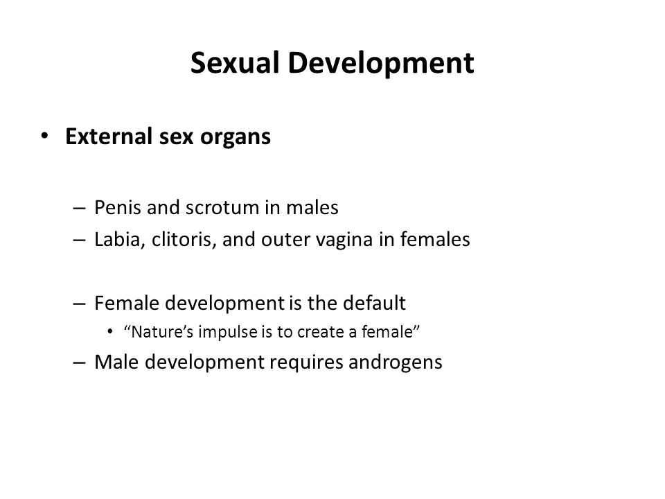 Sexual Development External sex organs Penis and scrotum in males