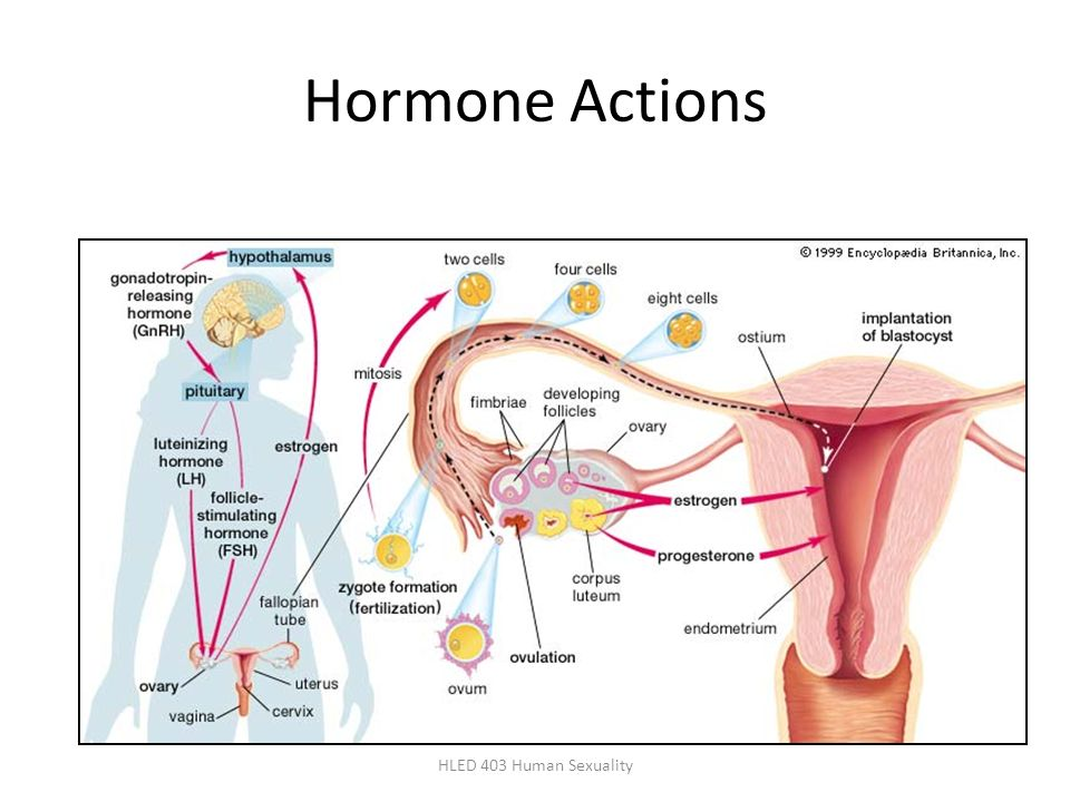 Hormone Actions HLED 403 Human Sexuality