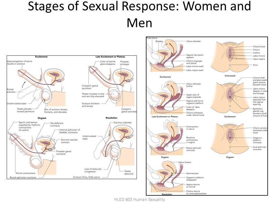 Stages of Sexual Response: Women and Men