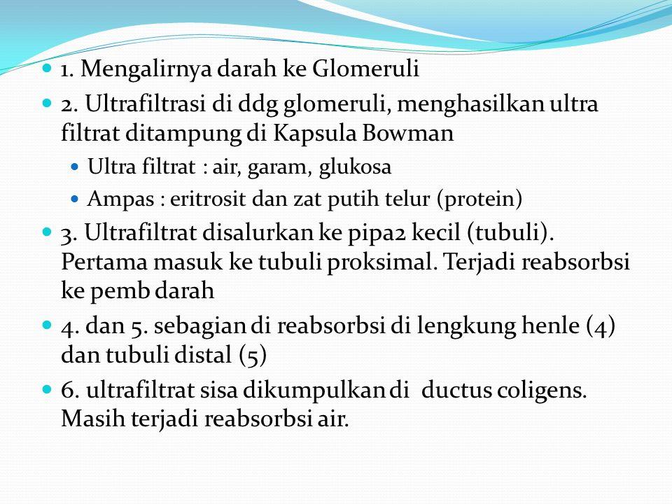 1. Mengalirnya darah ke Glomeruli