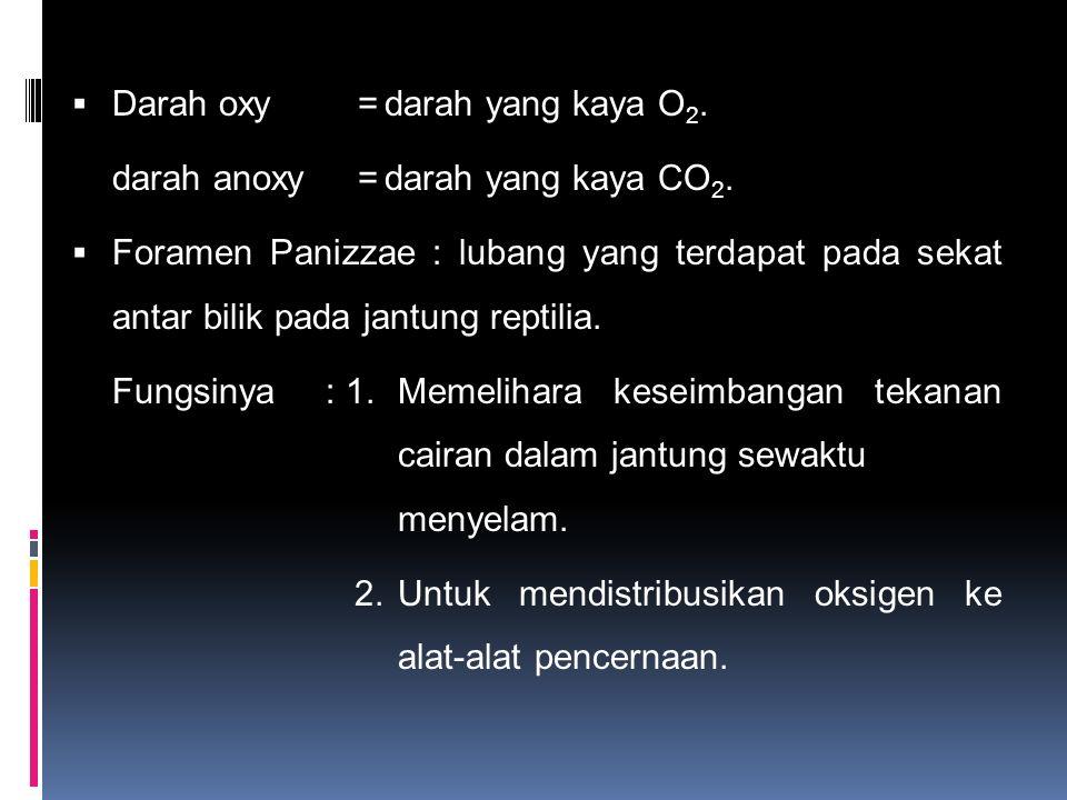 Darah oxy = darah yang kaya O2.
