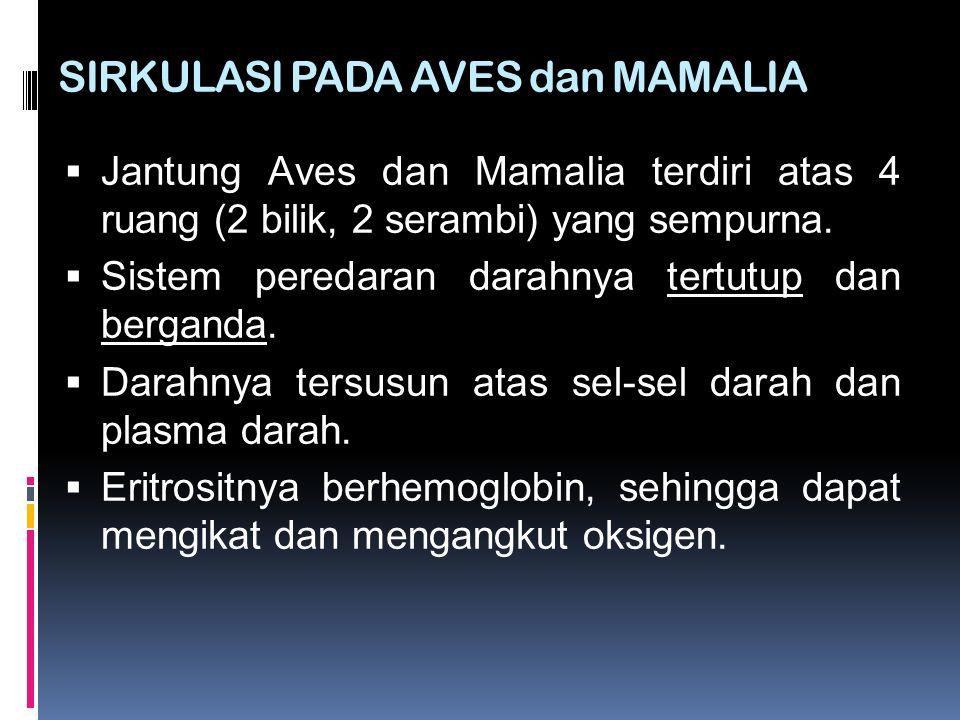SIRKULASI PADA AVES dan MAMALIA