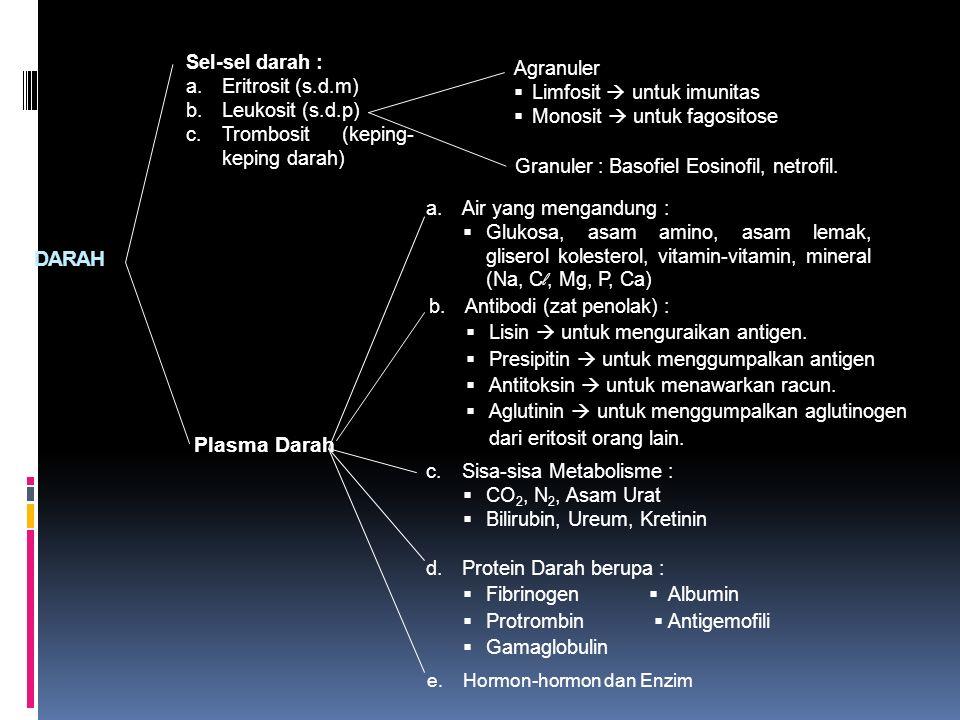 DARAH Plasma Darah Sel-sel darah : Agranuler Eritrosit (s.d.m)