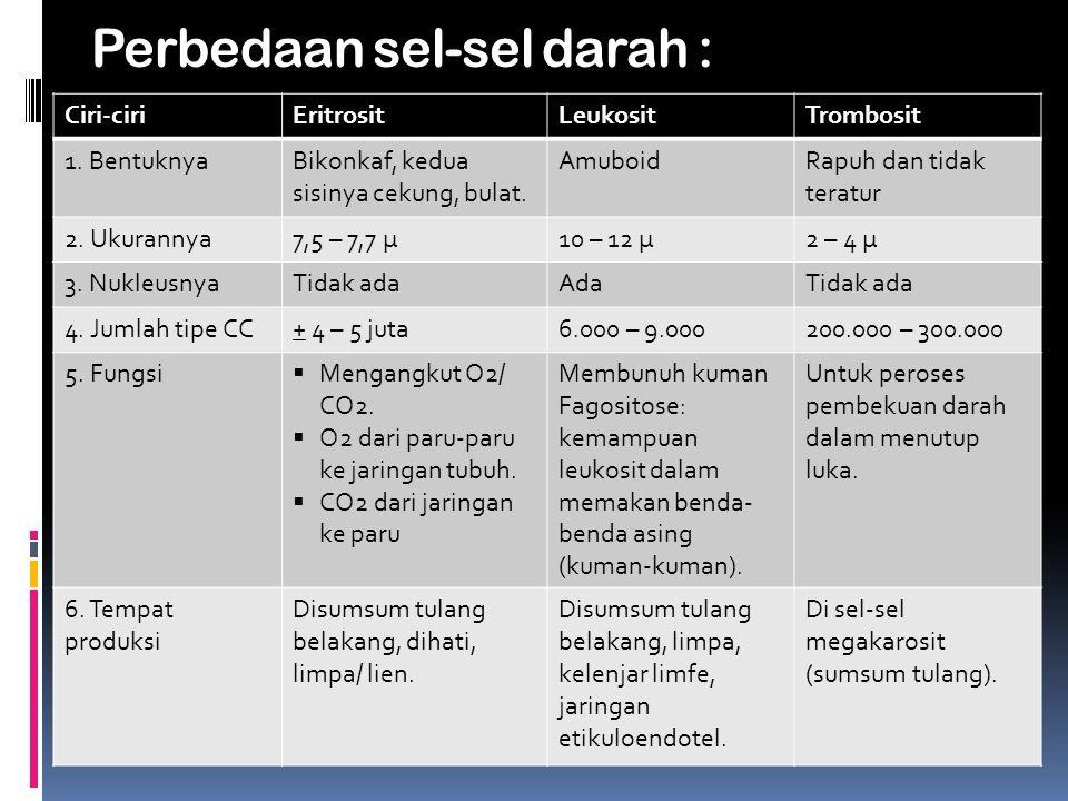 Perbedaan sel-sel darah :