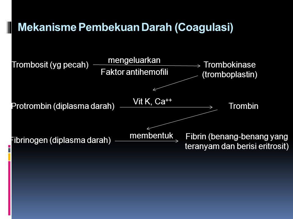Mekanisme Pembekuan Darah (Coagulasi)