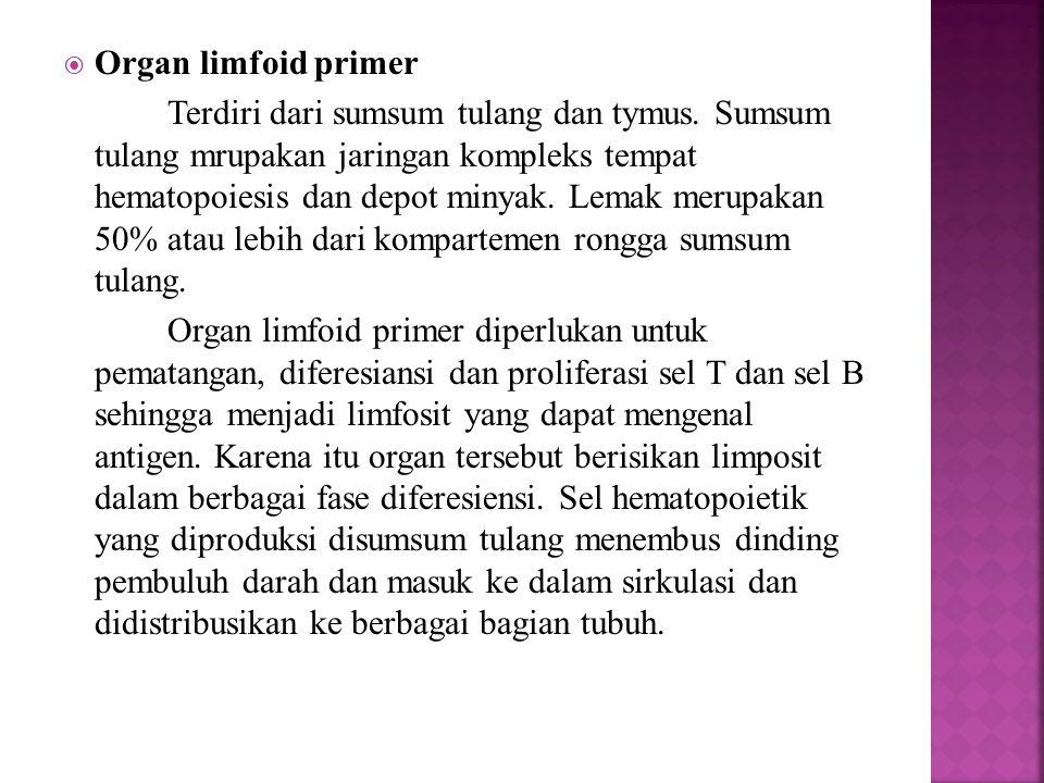 Organ limfoid primer