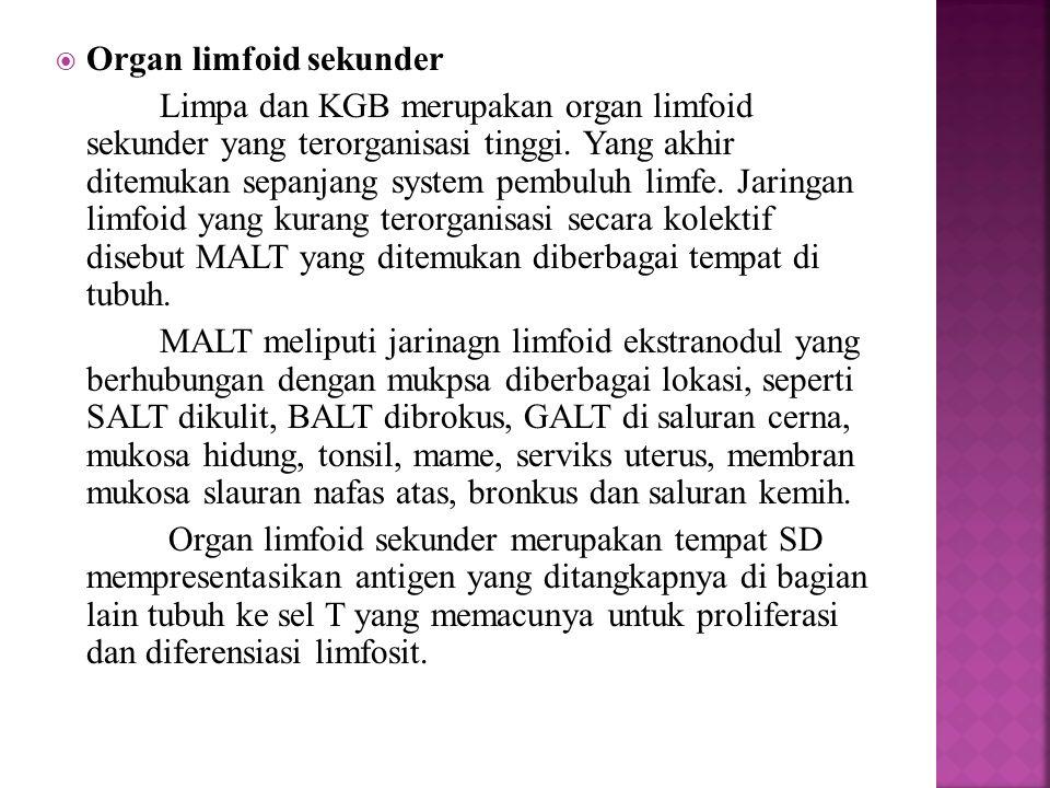 Organ limfoid sekunder