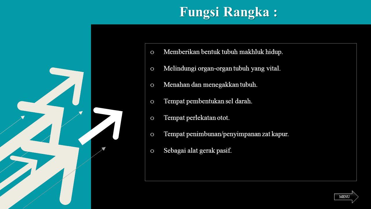 Fungsi Rangka : Memberikan bentuk tubuh makhluk hidup.