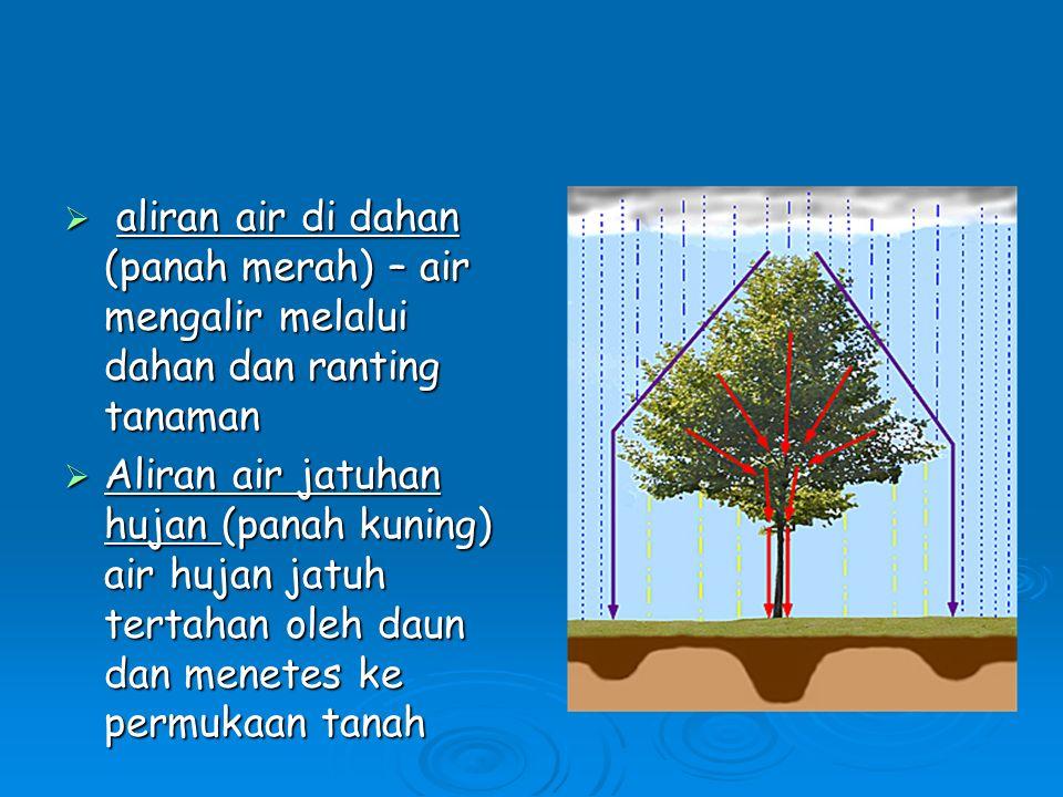 aliran air di dahan (panah merah) – air mengalir melalui dahan dan ranting tanaman