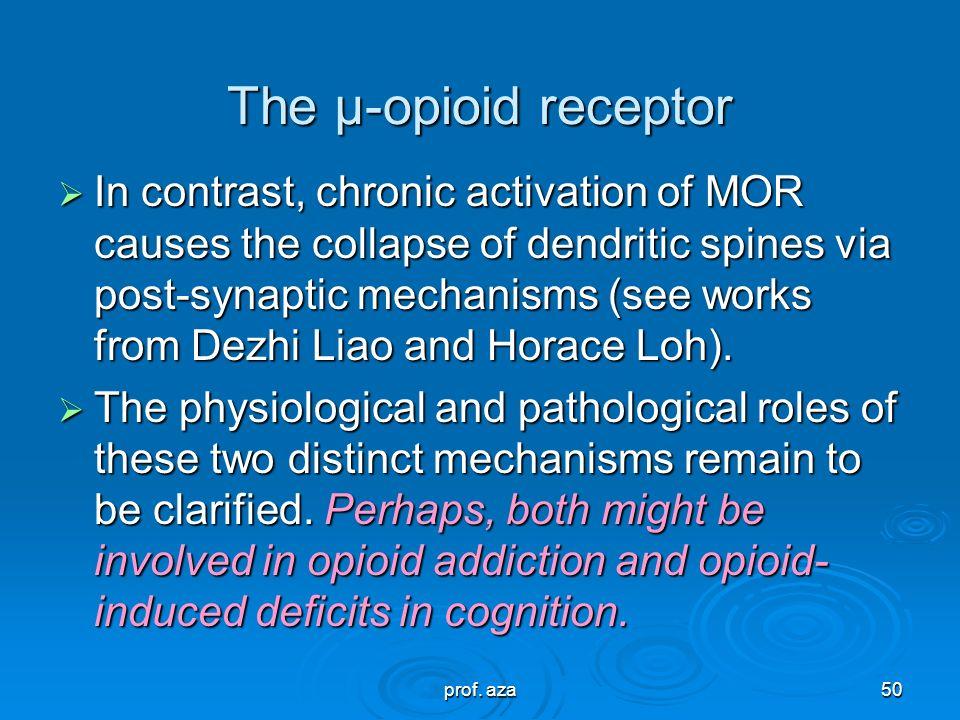 The μ-opioid receptor