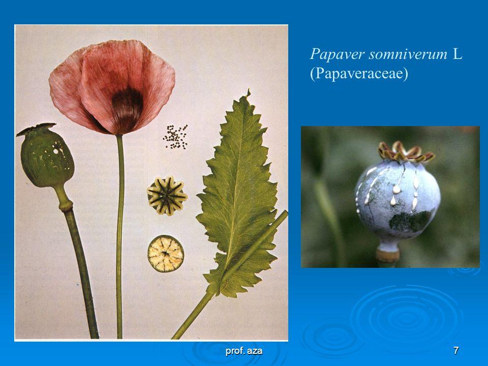 Papaver somniverum L (Papaveraceae)